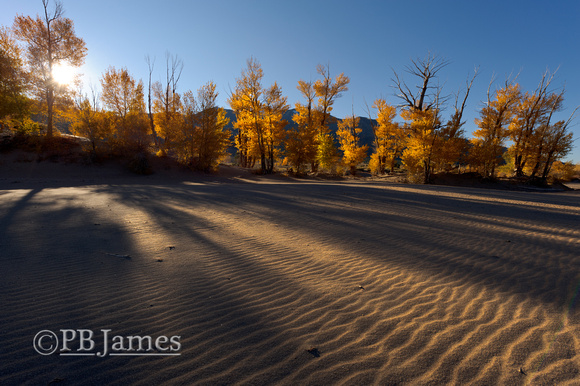Sandy Cottonwood Sunrise