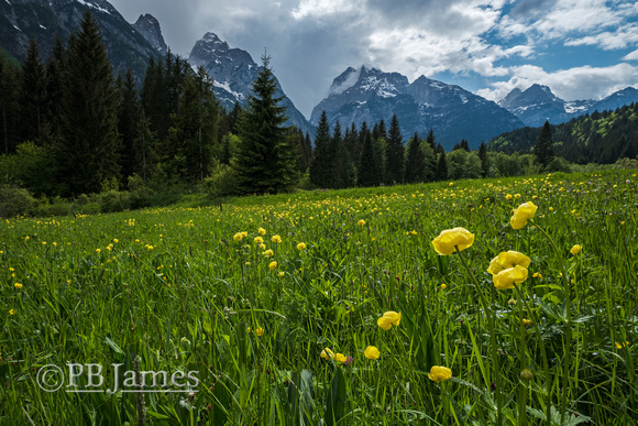 Early Blossoms, Dolomite Peaks
