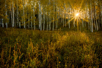 Morning Aspen Sunburst
