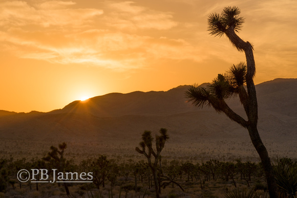 Valley of the Joshua Trees