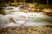New Life, Tuolumne River